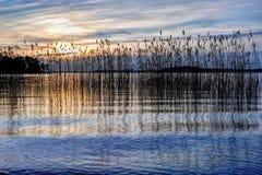 ηλιοβασίλεμα καλάμων Στοκ φωτογραφίες με δικαίωμα ελεύθερης χρήσης