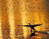 ηλιοβασίλεμα κορμοράνω& Στοκ Φωτογραφίες
