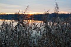 Ηλιοβασίλεμα, λίμνη και κάλαμος στοκ εικόνες με δικαίωμα ελεύθερης χρήσης