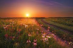 Ηλιοβασίλεμα λιβαδιών kon-Tah Wah ` με Wildflowers στοκ εικόνες