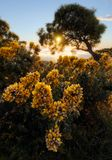 Ηλιοβασίλεμα μέσω ενός δέντρου σε Maido στο Saint-Paul, Νήσος Ρεϊνιόν Στοκ Φωτογραφία