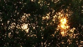 Ηλιοβασίλεμα μέσω της κορώνας των δέντρων απόθεμα βίντεο