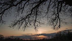 Ηλιοβασίλεμα μέσω των δέντρων στο δάσος απόθεμα βίντεο