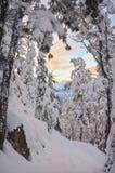 Ηλιοβασίλεμα μέσω των χιονισμένων δέντρων το χειμώνα Στοκ Εικόνες