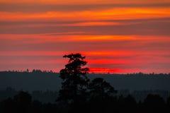 Ηλιοβασίλεμα με τα πορτοκαλιά και κόκκινα σύννεφα πίσω από τα δέντρα πεύκων στοκ εικόνες με δικαίωμα ελεύθερης χρήσης
