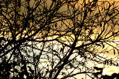 Ηλιοβασίλεμα με τον πορτοκαλιούς ουρανό και τους κλάδους Στοκ Εικόνα