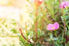 Ηλιοβασίλεμα με το λουλούδι Στοκ Εικόνες