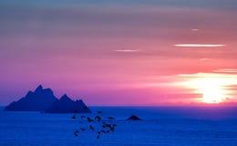 Ηλιοβασίλεμα νησιών Skellig με το κοπάδι seagulls Στοκ Φωτογραφίες