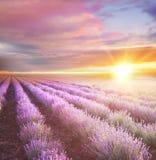 Ηλιοβασίλεμα πέρα από έναν ιώδη lavender τομέα στοκ εικόνα