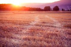 Ηλιοβασίλεμα πέρα από έναν τομέα σίτου - χρόνος συγκομιδών Στοκ Εικόνες