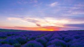 Ηλιοβασίλεμα πέρα από έναν τομέα Lavender απόθεμα βίντεο