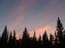 Ηλιοβασίλεμα πέρα από τα δέντρα πεύκων Στοκ Εικόνα