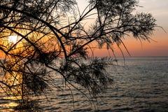 Ηλιοβασίλεμα πέρα από τη θάλασσα μέσω των κλάδων του δέντρου στοκ εικόνες