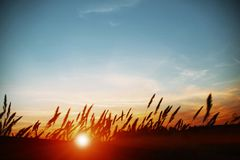 Ηλιοβασίλεμα πέρα από τον τομέα του καλαμποκιού στοκ φωτογραφία με δικαίωμα ελεύθερης χρήσης