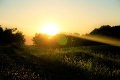 Ηλιοβασίλεμα πέρα από το λιβάδι και τα δέντρα σε Ptuj Στοκ Φωτογραφία