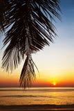 ηλιοβασίλεμα παραλιών τροπικό Στοκ εικόνες με δικαίωμα ελεύθερης χρήσης