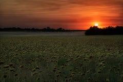 ηλιοβασίλεμα πεδίων Στοκ φωτογραφίες με δικαίωμα ελεύθερης χρήσης