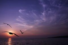ηλιοβασίλεμα πουλιών Στοκ Φωτογραφία