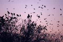 ηλιοβασίλεμα πουλιών Στοκ εικόνα με δικαίωμα ελεύθερης χρήσης