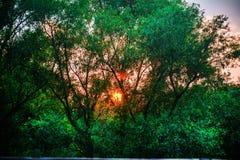 Ηλιοβασίλεμα σε Gorica Podgorica Στοκ Εικόνες