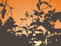 ηλιοβασίλεμα σκιαγραφιών διανυσματική απεικόνιση