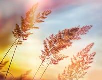 Ηλιοβασίλεμα - σούρουπο στο λιβάδι χλόης, όμορφη υψηλή χλόη - όμορφη φύση Στοκ φωτογραφία με δικαίωμα ελεύθερης χρήσης