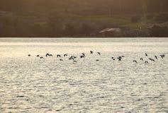 Ηλιοβασίλεμα στην ακτή με την πτήση των πουλιών Στοκ φωτογραφίες με δικαίωμα ελεύθερης χρήσης