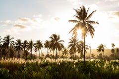 Ηλιοβασίλεμα στη φυτεία καρύδων και ζάχαρης canne κοντά σε Achada Fazenda στο νησί του Σαντιάγο στο Πράσινο Ακρωτήριο - Cabo Verd στοκ εικόνες