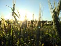 Ηλιοβασίλεμα στον τομέα στοκ φωτογραφίες