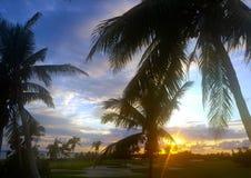 Ηλιοβασίλεμα στο γήπεδο του γκολφ με τους φοίνικες στοκ φωτογραφία με δικαίωμα ελεύθερης χρήσης