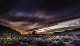 Ηλιοβασίλεμα στο εθνικό πάρκο Καλιφόρνια δέντρων του Joshua στοκ φωτογραφία με δικαίωμα ελεύθερης χρήσης