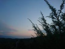 Ηλιοβασίλεμα στο θάμνο στοκ εικόνα