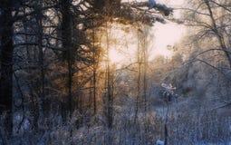 Ηλιοβασίλεμα στο σιβηρικό δάσος Στοκ Εικόνες