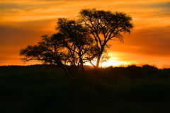 ηλιοβασίλεμα της Ναμίμπι&al Στοκ φωτογραφία με δικαίωμα ελεύθερης χρήσης