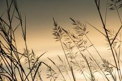 Ηλιοβασίλεμα τομέων χλοών στοκ εικόνες