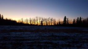 Ηλιοβασίλεμα τοπίων κλάδων δέντρων χιονιού Στοκ Φωτογραφίες