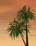 ηλιοβασίλεμα τροπικό Διανυσματική απεικόνιση