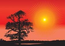 ηλιοβασίλεμα φύσης Ελεύθερη απεικόνιση δικαιώματος