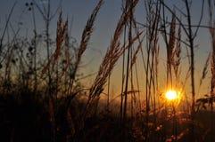 ηλιοβασίλεμα χλόης στοκ φωτογραφία με δικαίωμα ελεύθερης χρήσης