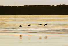 ηλιοβασίλεμα 2 πουλιών Στοκ φωτογραφία με δικαίωμα ελεύθερης χρήσης