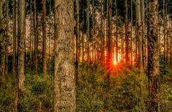 Ηλιοβασίλεμα Amog τα δέντρα Στοκ Φωτογραφίες