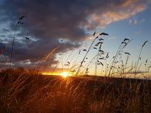 Ηλιοβασίλεμα Hill κορμών Στοκ φωτογραφίες με δικαίωμα ελεύθερης χρήσης