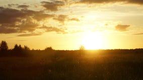 Ηλιοβασίλεμα hyperlapse Θερινός ήλιος βραδιού, τομέας, χλόη, έντομα και τρέχοντας σύννεφα απόθεμα βίντεο