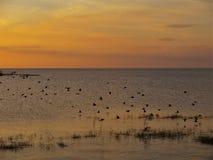 Ηλιοβασίλεμα Okeechobee λιμνών κοντά σε Loxahatchee, Φλώριδα Στοκ εικόνα με δικαίωμα ελεύθερης χρήσης