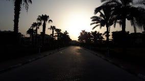 Ηλιοβασίλεμα Siluet φοινίκων ρομαντικό στοκ φωτογραφία με δικαίωμα ελεύθερης χρήσης
