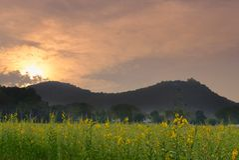 ηλιοβασίλεμα sunhemp στον τομέα λουλουδιών λιβάδι χλωρίδας με τη θέα βουνού Στοκ εικόνες με δικαίωμα ελεύθερης χρήσης