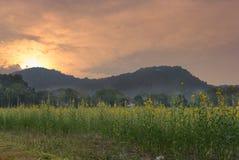 ηλιοβασίλεμα sunhemp στον τομέα λουλουδιών λιβάδι χλωρίδας με τη θέα βουνού Στοκ Εικόνες
