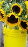 ηλιοφάνεια κάδων Στοκ εικόνα με δικαίωμα ελεύθερης χρήσης