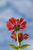 ηλιοφάνεια λουλουδιώ&nu Στοκ Εικόνα