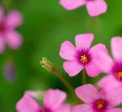 ηλιοφάνεια λουλουδιώ&nu Στοκ Εικόνες
